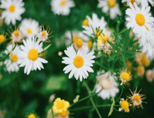 Bach florais