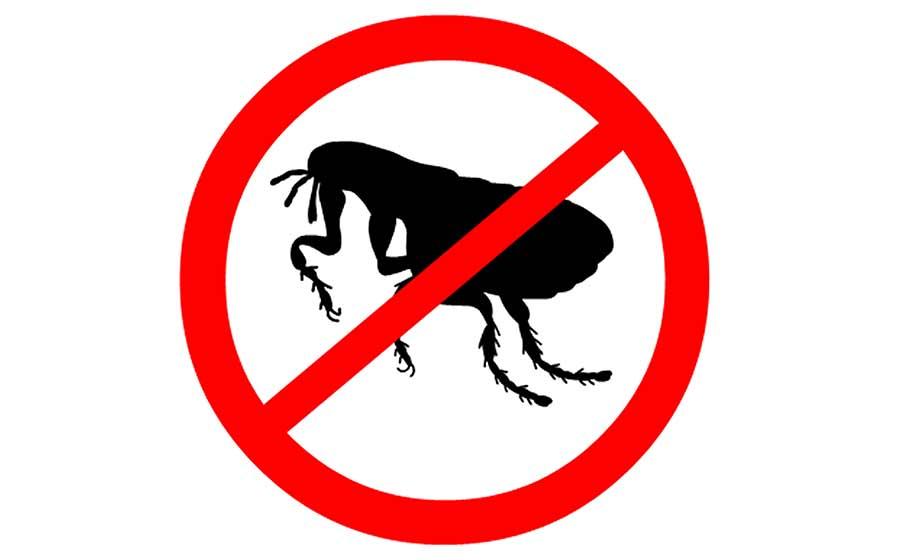sonho com pulga
