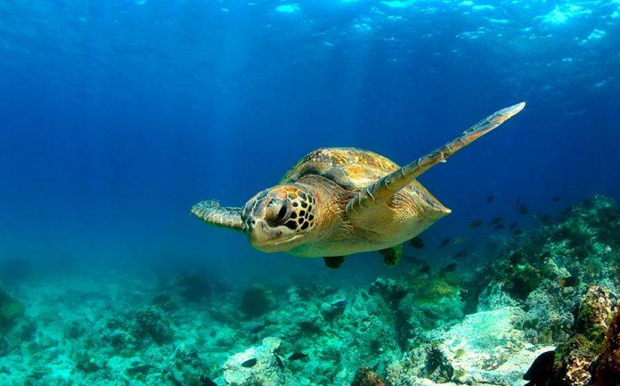sonho com tartaruga