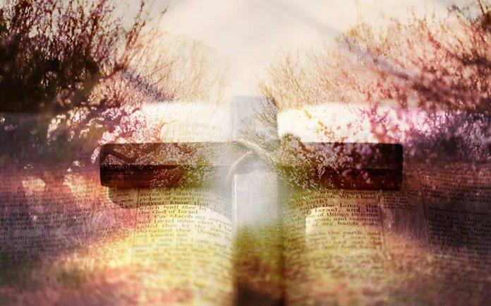 142 salmo