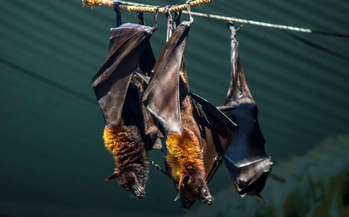 significado de sonhar com morcego